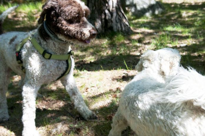 Hundägare i Bredäng