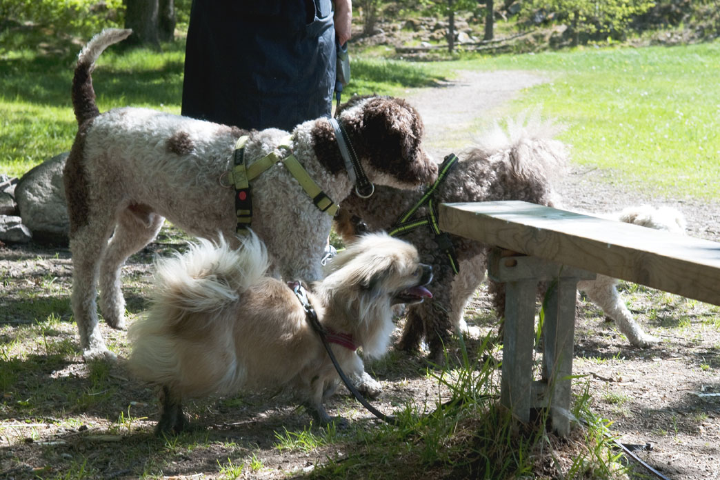 Hundgruppen