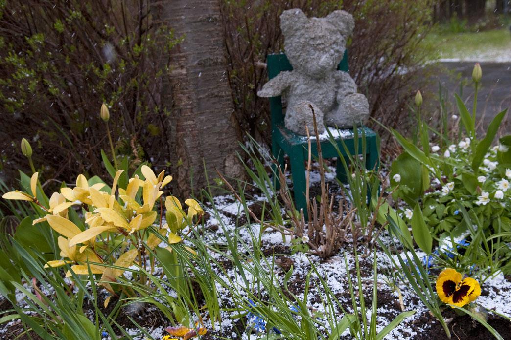 Nalle och blommor i hagel